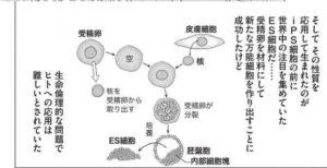 出典:インベスターZのES細胞の説明